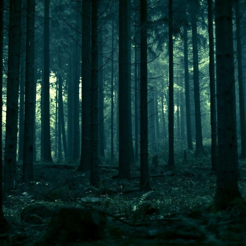 10 Latest Dark Forest Desktop Wallpaper FULL HD 1080p For PC Background 2021 free download dark forest wallpapers wallpaper cave 4 800x800