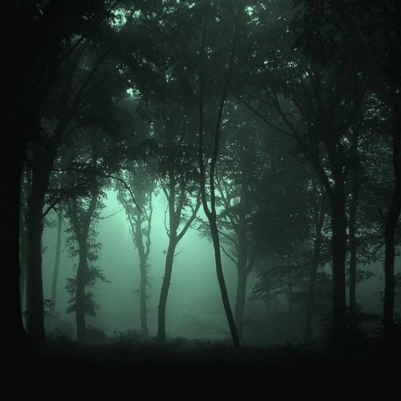 10 Top Dark Forest Wallpaper 1080P FULL HD 1920×1080 For PC Desktop 2018 free download dark forest wallpapers wallpaper cave 800x800