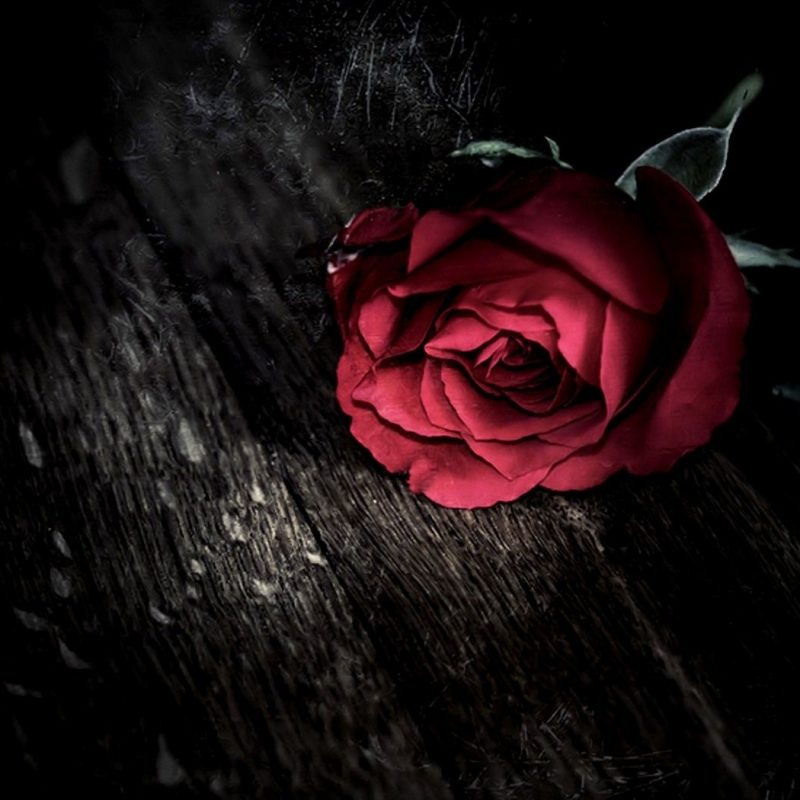 10 Top Dark Red Rose Wallpapers FULL HD 1080p For PC Desktop 2020 free download dark gothic holidays valentines day roses mood wallpaper 800x800