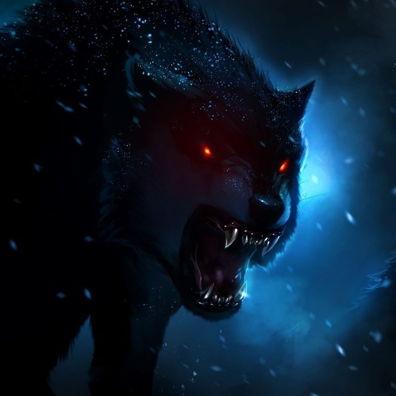 10 New Dark Wolf Wallpaper Hd FULL HD 1920×1080 For PC Desktop 2021 free download dark wolf wallpaper download wolf hd wallpaper appraw wolf 800x800