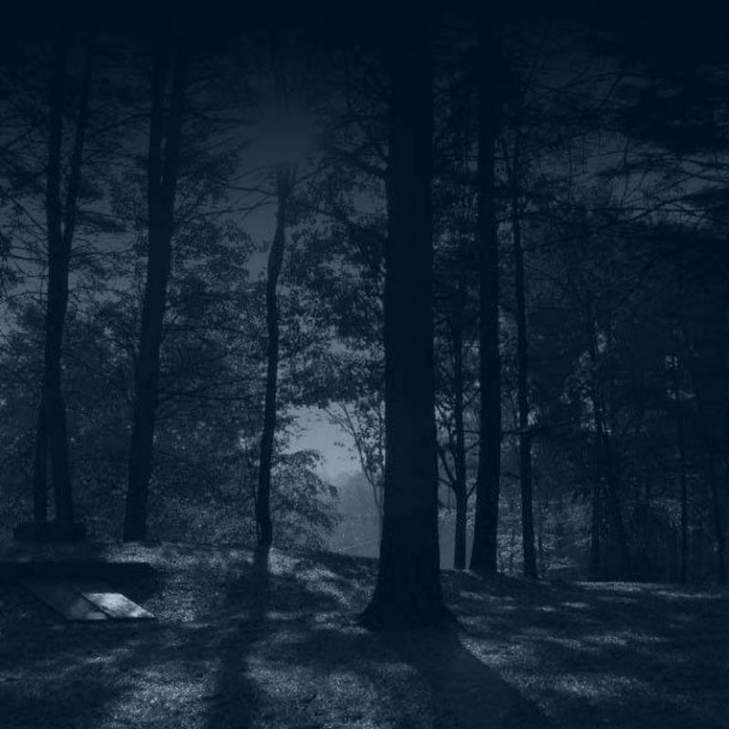 10 Top Woods At Night Wallpaper FULL HD 1920×1080 For PC Background 2018 free download dark woods wallpapers wallpaper cave 1 800x800