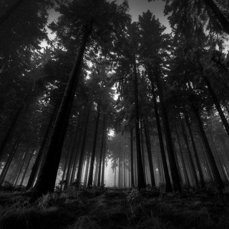 10 Top Dark Wood Wallpaper Hd FULL HD 1080p For PC Background 2018 free download dark woods wallpapers wallpaper cave 800x800