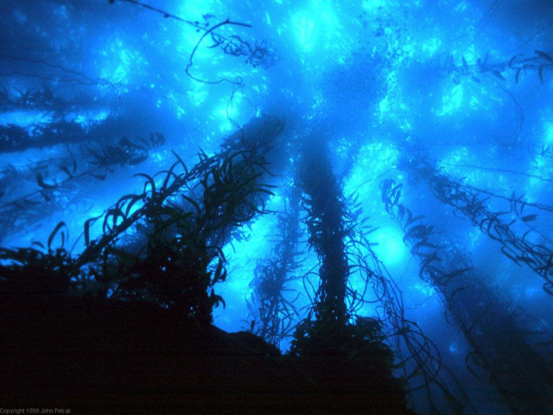 deep sea wallpaper ·①
