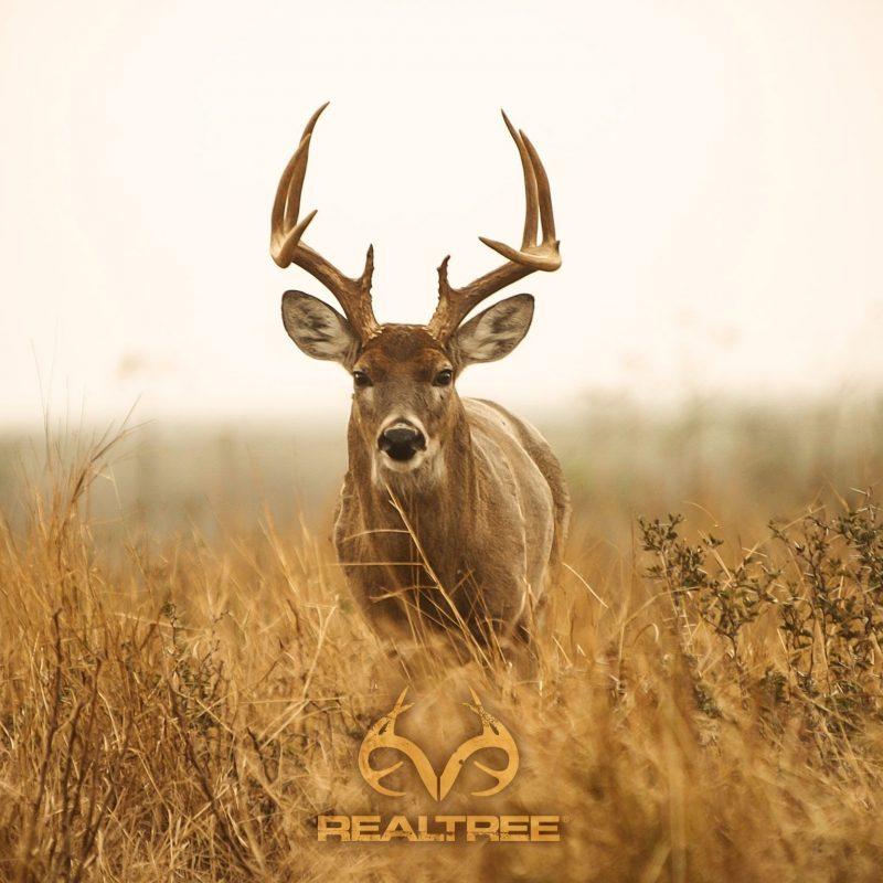 10 Best Deer Hunting Desktop Wallpaper FULL HD 1080p For PC Desktop 2021 free download deer hunting desktop decor pinterest hunting wallpaper and 800x800