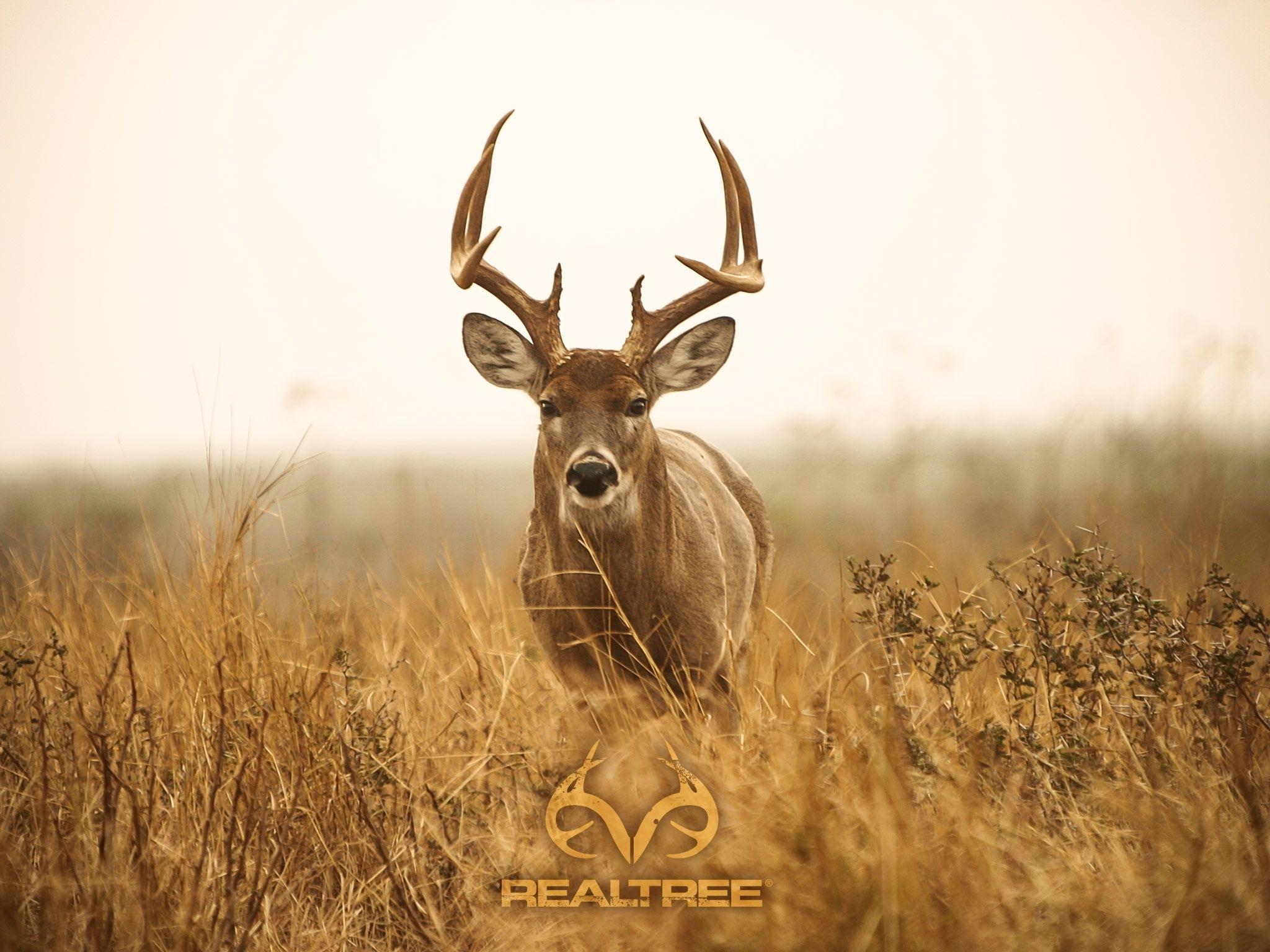 deer hunting desktop.   decor   pinterest   hunting wallpaper and