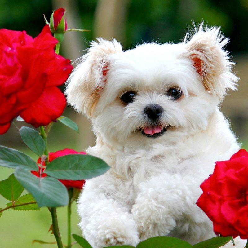 10 New Cute Puppy Pictures Wallpaper FULL HD 1080p For PC Background 2020 free download desktop cute and funny pics of dogs and puppies download whole 800x800