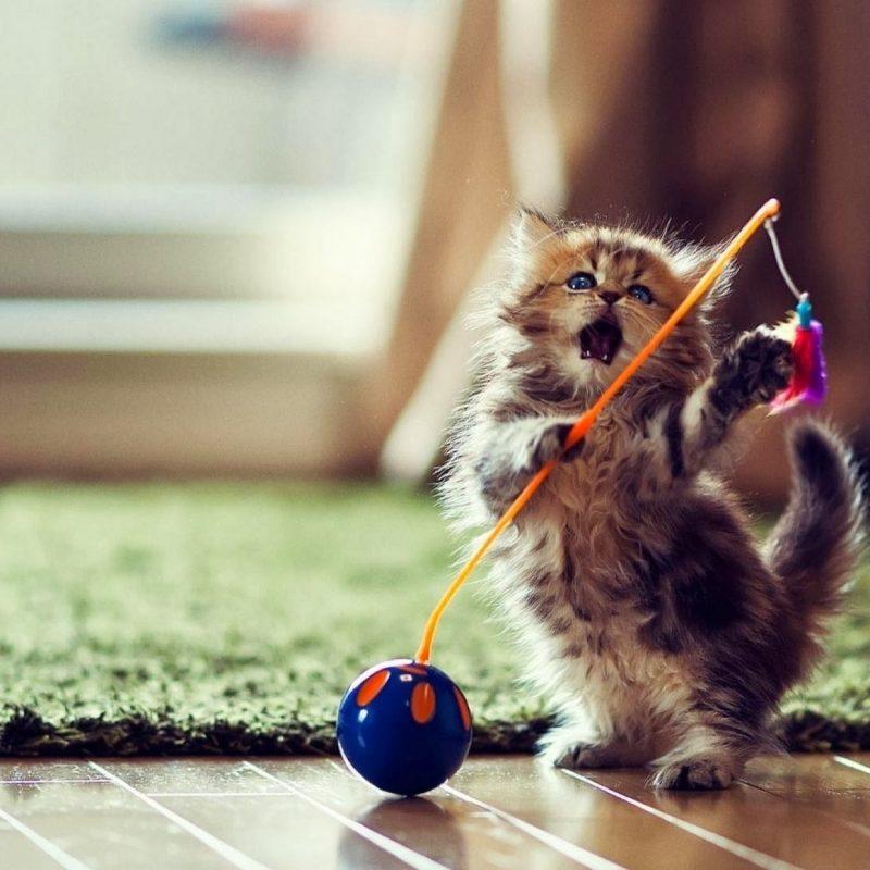 10 Best Hd Cute Cat Wallpapers FULL HD 1080p For PC Desktop 2018 free download desktop cute cat and kitten pics download 800x800