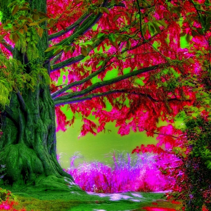 10 Latest Spring Trees Wallpaper Desktop FULL HD 1080p For PC Desktop 2020 free download desktop spring backgrounds wallpaper cave 800x800