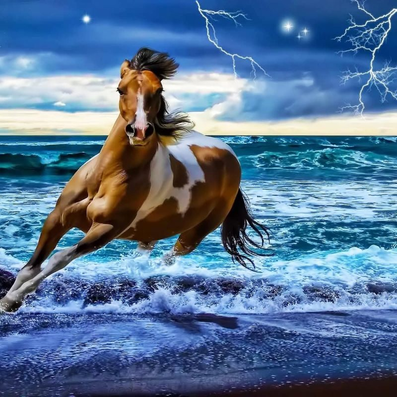 10 Latest Horse Backgrounds For Computers FULL HD 1920×1080 For PC Background 2020 free download desktop wallpaper c2b7 gallery c2b7 windows 7 c2b7 fantastic horse computer 800x800