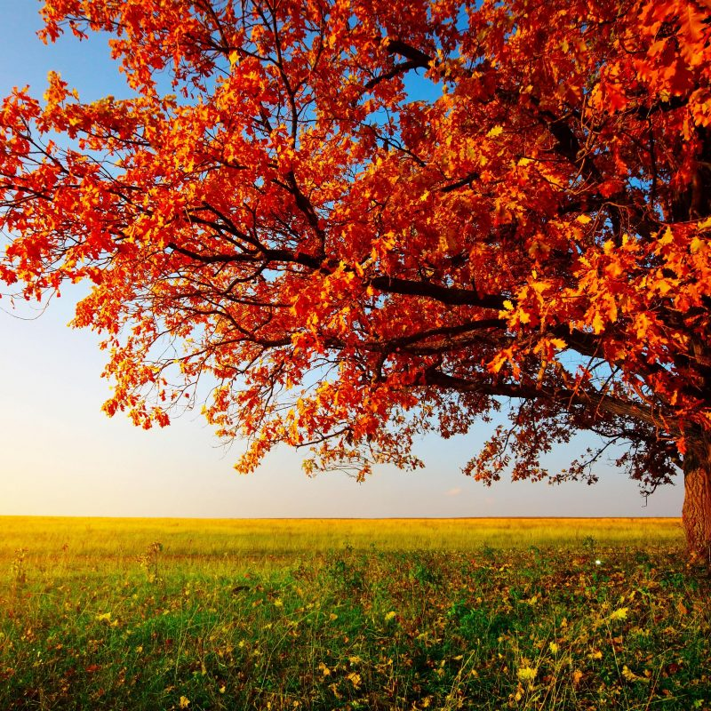 10 New Fall Images For Desktop FULL HD 1920×1080 For PC Background 2021 free download desktop wallpaper fall gallery 56 images 800x800