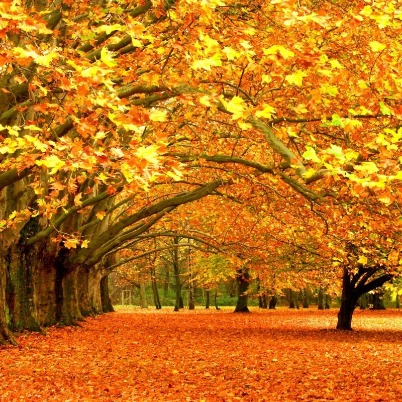 10 Latest Computer Wallpaper Nature Fall FULL HD 1920×1080 For PC Background 2018 free download desktop wallpaper nature autumn widescreen 2 hd wallpapers 800x800