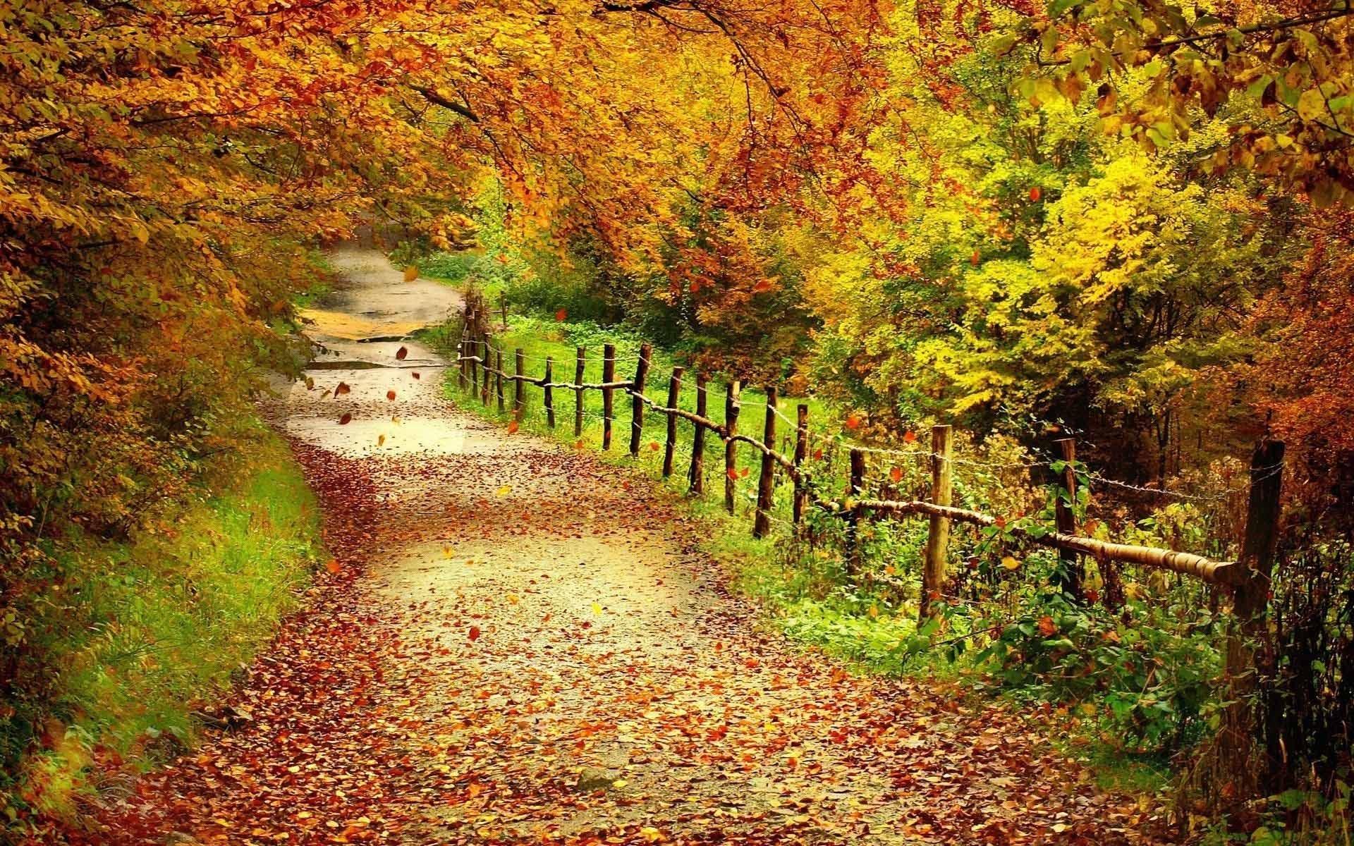 desktop wallpapers fall colors hd high. - media file | pixelstalk