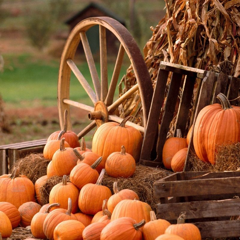 10 Top Fall Harvest Wallpaper Backgrounds FULL HD 1920×1080 For PC Background 2018 free download desktop wallpapers other backgrounds autumn harvest www 1 800x800