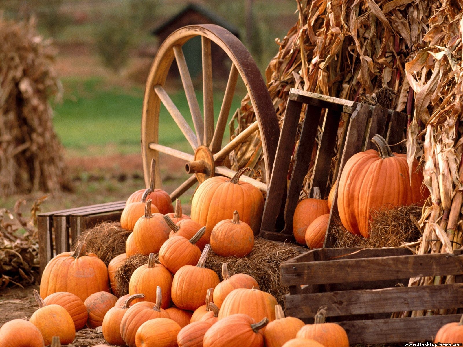 desktop wallpapers » other backgrounds » autumn harvest » www