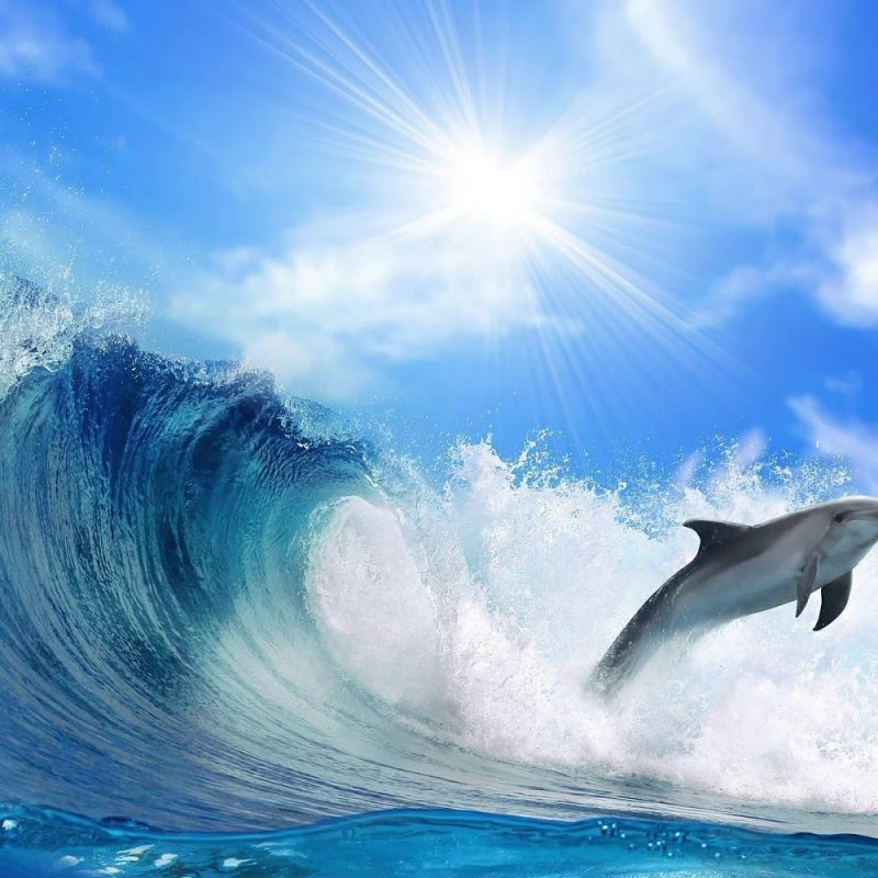 10 Best Dolphins Wallpaper Free Download FULL HD 1920×1080 For PC Background 2021 free download diving dolphins desktop hd images free download 800x800