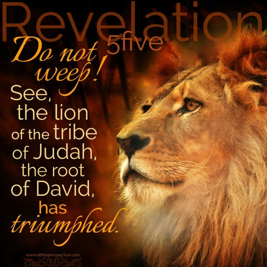 do not weep! see, the lion of the tribe of judah, the root of david