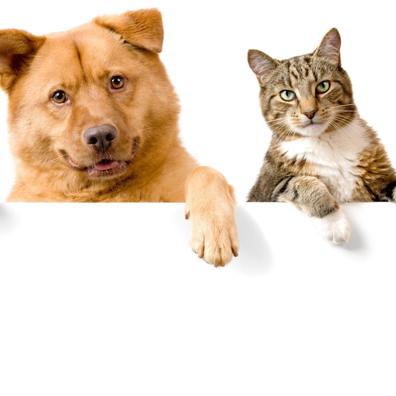 10 Best Cat And Dog Background FULL HD 1920×1080 For PC Background 2018 free download dog and cat wallpaper background for desktop wallpaper long wallpapers 800x800