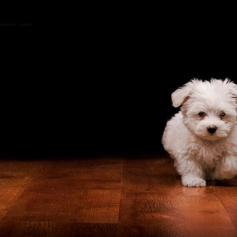 10 Latest Dog Backgrounds For Computer FULL HD 1080p For PC Background 2018 free download dog backgrounds pictures images media file pixelstalk 800x800