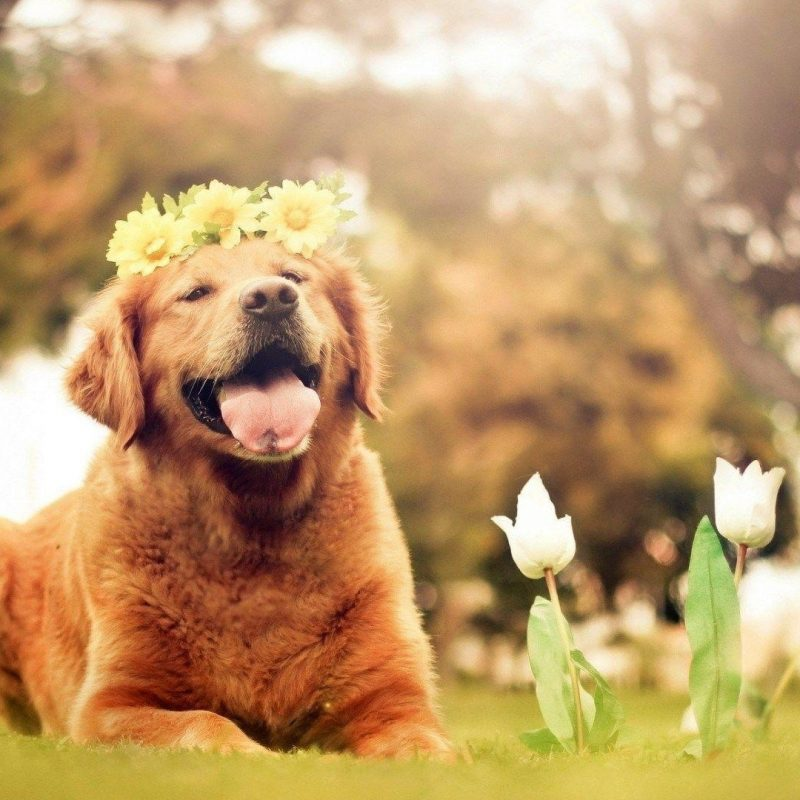 10 Latest Dog Backgrounds For Computer FULL HD 1080p For PC Background 2018 free download dog desktop backgrounds wallpaper cave 800x800