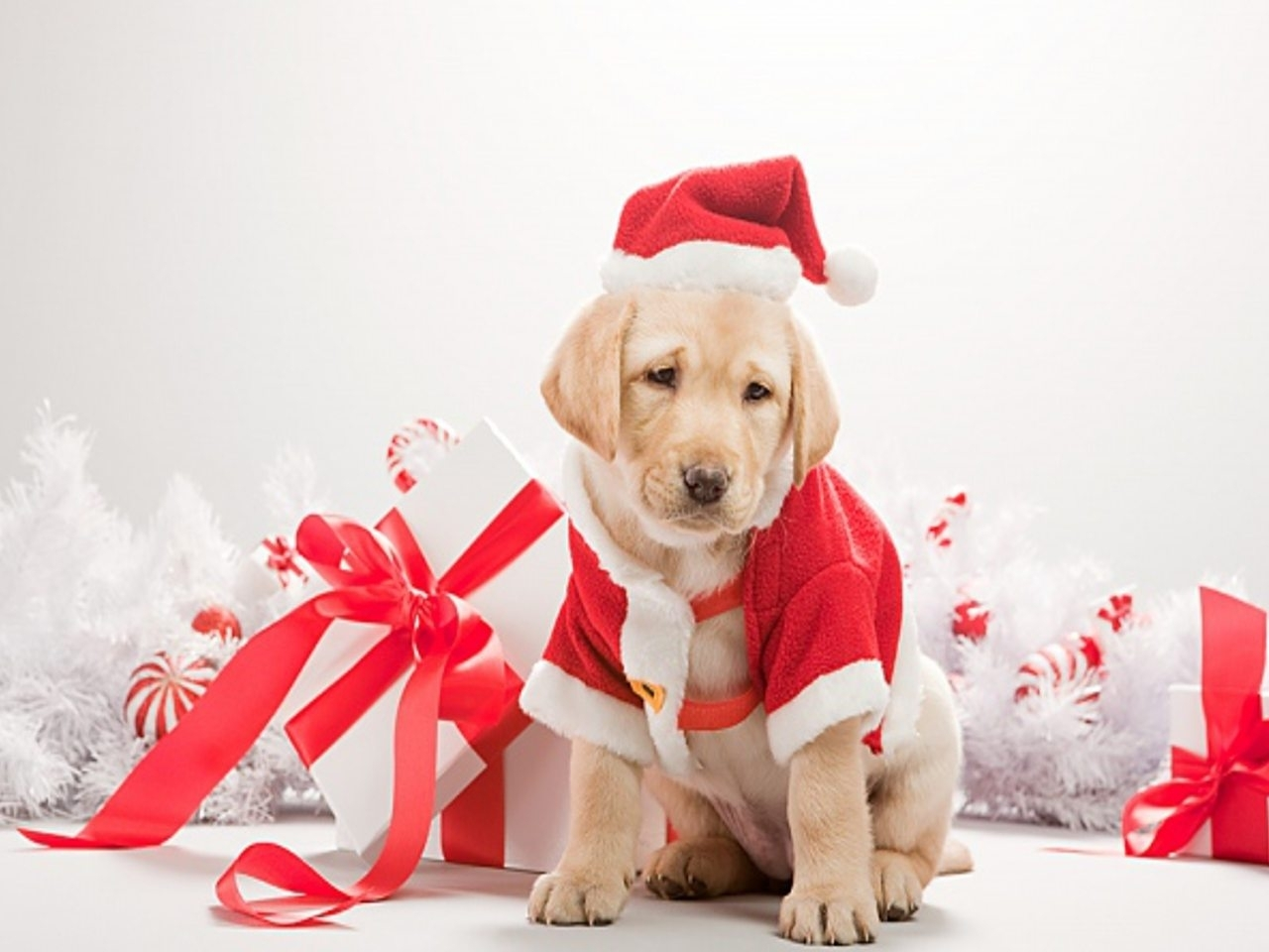 dog merry christmas 2015 wallpaper - hd wallpapers
