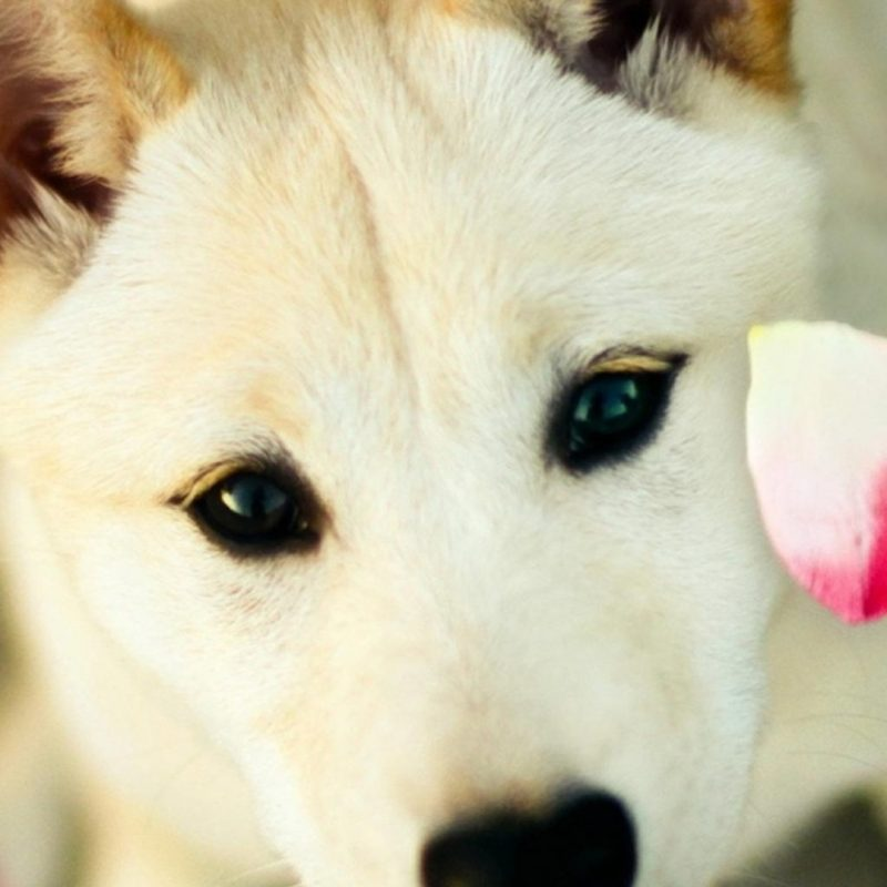 10 Top Dog Wallpaper For Android FULL HD 1080p For PC Background 2018 free download dog pink petals android wallpaper free download 800x800