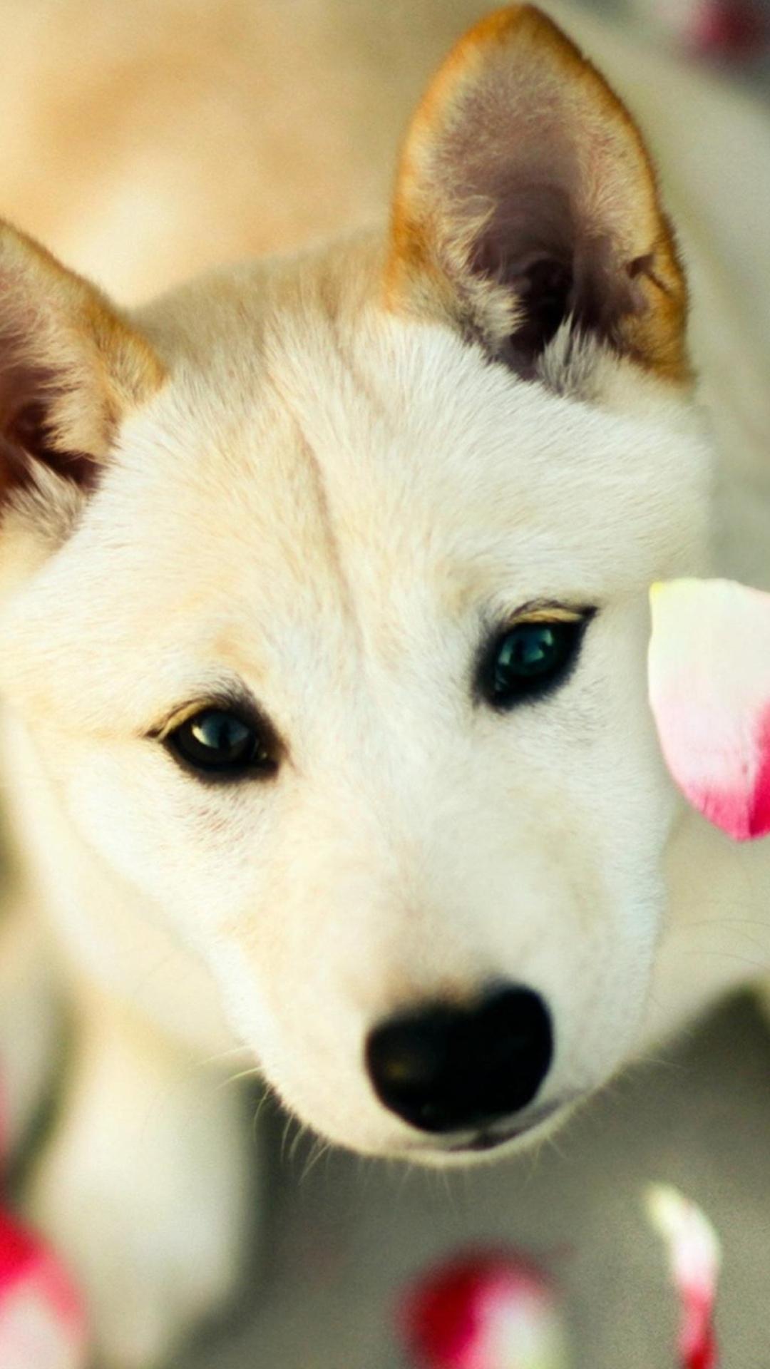 dog pink petals android wallpaper free download