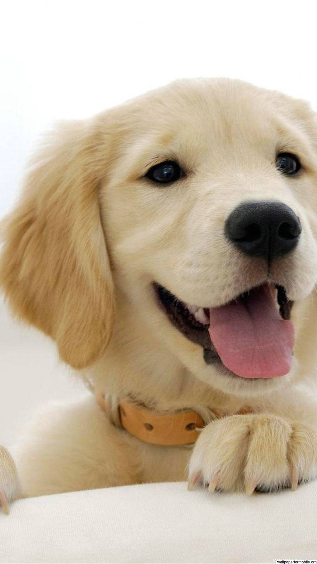 dog wallpaper for android | mobile wallpapers