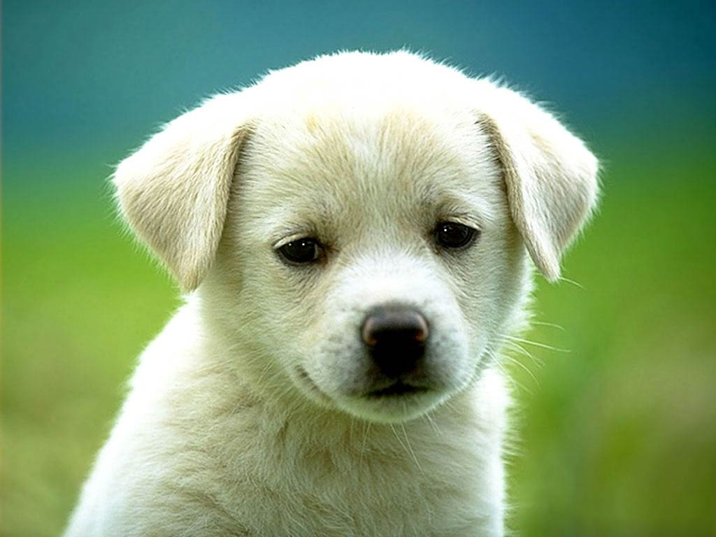 dog wallpapers - animals town