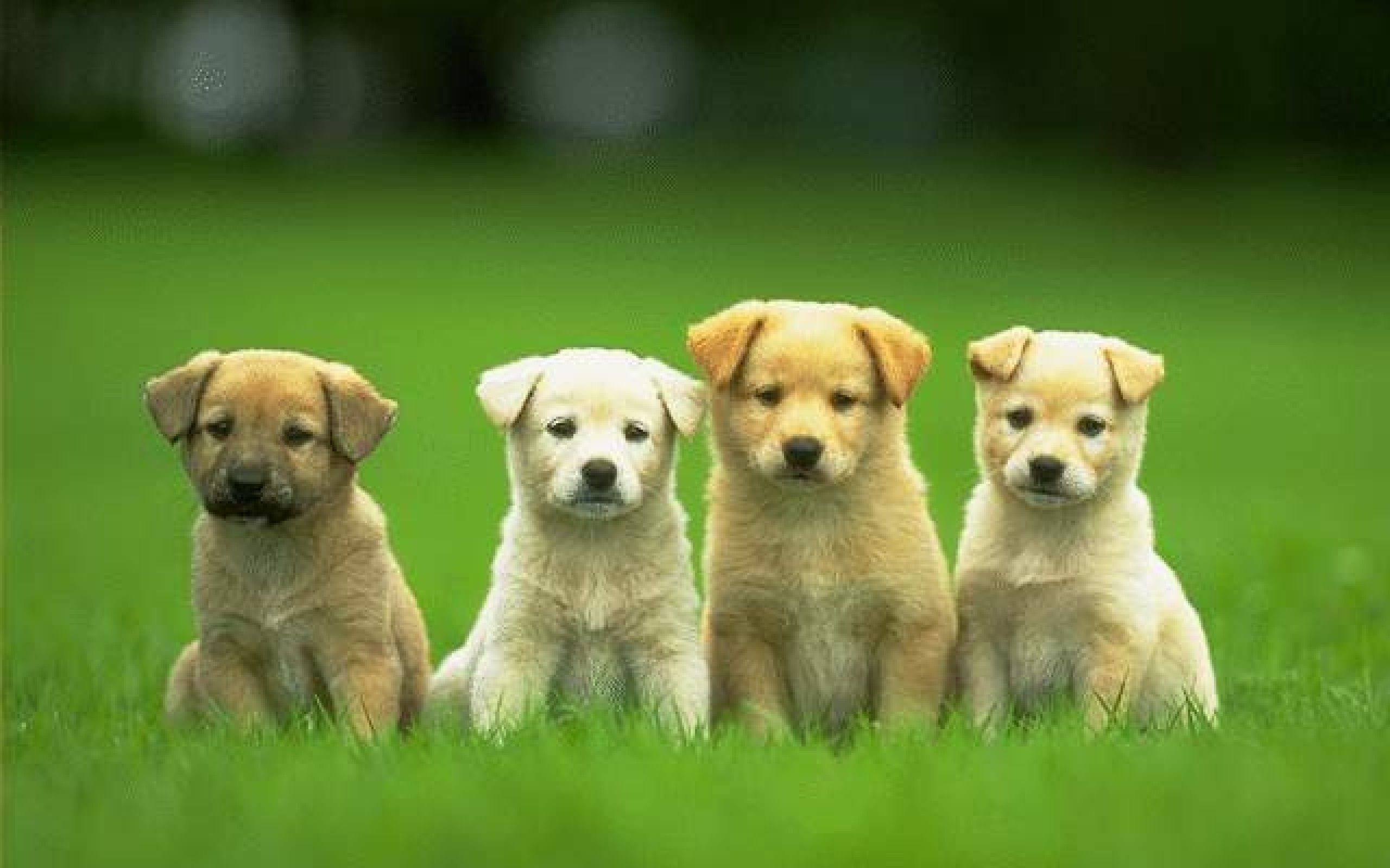 dog wallpapers collection for free download   hd wallpapers