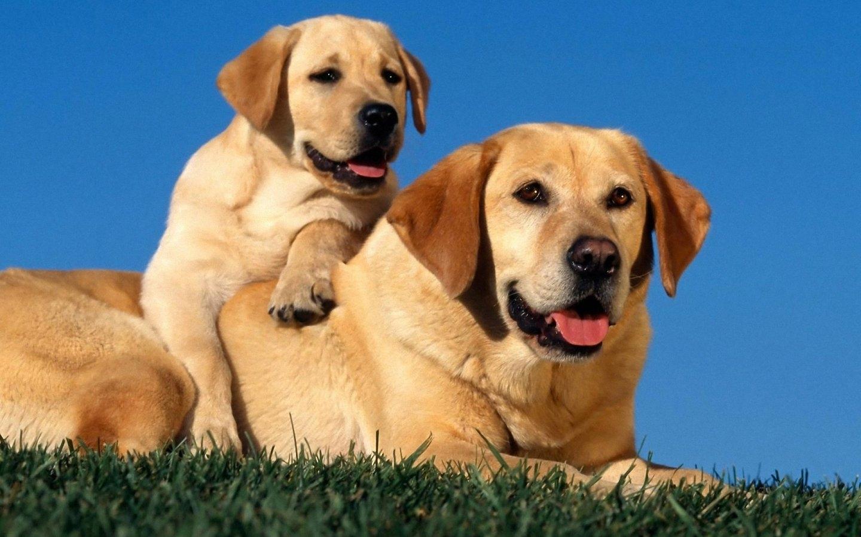 10 best dog wallpaper free download full hd 1080p for pc desktop