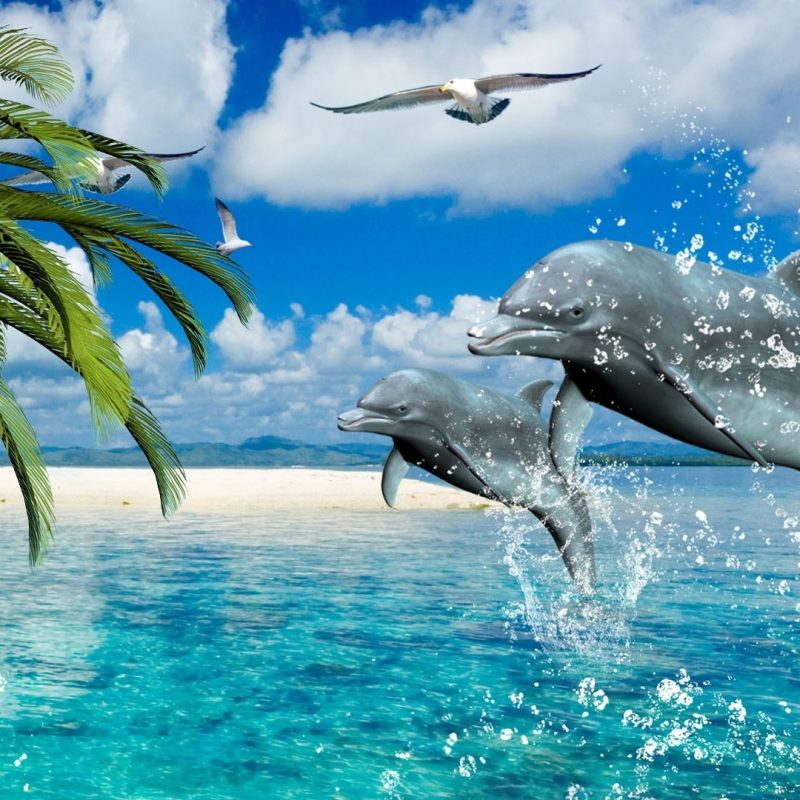 10 Best Dolphins Wallpaper Free Download FULL HD 1920×1080 For PC Background 2021 free download dolphin wallpapers best wallpapers 800x800