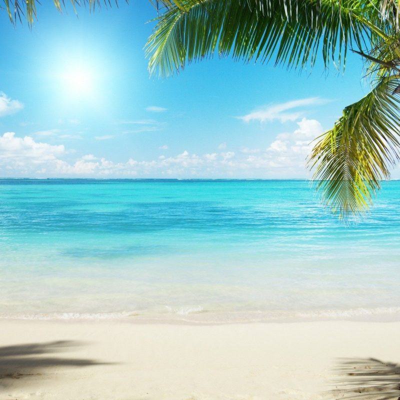 10 Most Popular Beautiful Beach Backgrounds Palm Trees FULL HD 1920×1080 For PC Desktop 2020 free download download beach wallpaper 13045 1920x1200 px high resolution 800x800