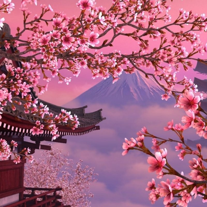 10 New Hd Wallpapers Cherry Blossom FULL HD 1080p For PC Desktop 2020 free download download cherry blossom desktop wallpapers wallpaper cave 1 800x800