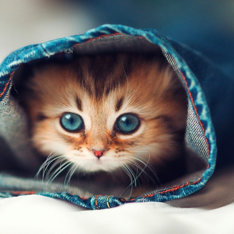 10 Latest Cute Cat Hd Wallpaper 1920X1080 FULL HD 1920×1080 For PC Background 2020 free download download cute cats hd wallpaper full pics backgrounds funny cat and 800x800