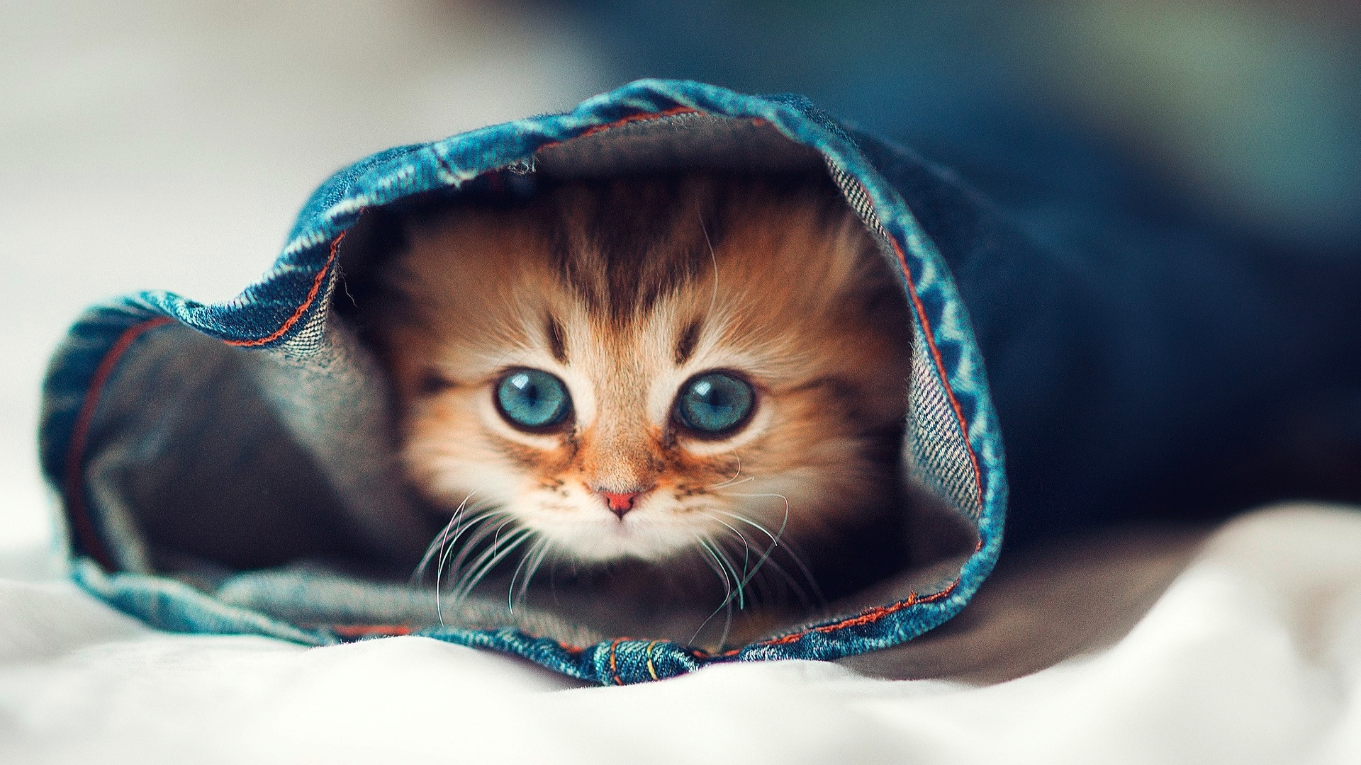 download cute cats hd wallpaper full pics backgrounds funny cat and
