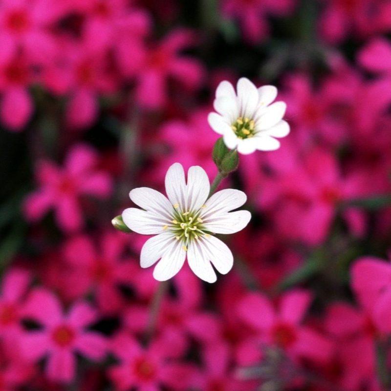 10 Latest Flower Backgrounds For Computer FULL HD 1920×1080 For PC Desktop 2018 free download download desktop wallpaper of flowers hd backgrounds computer 1 800x800