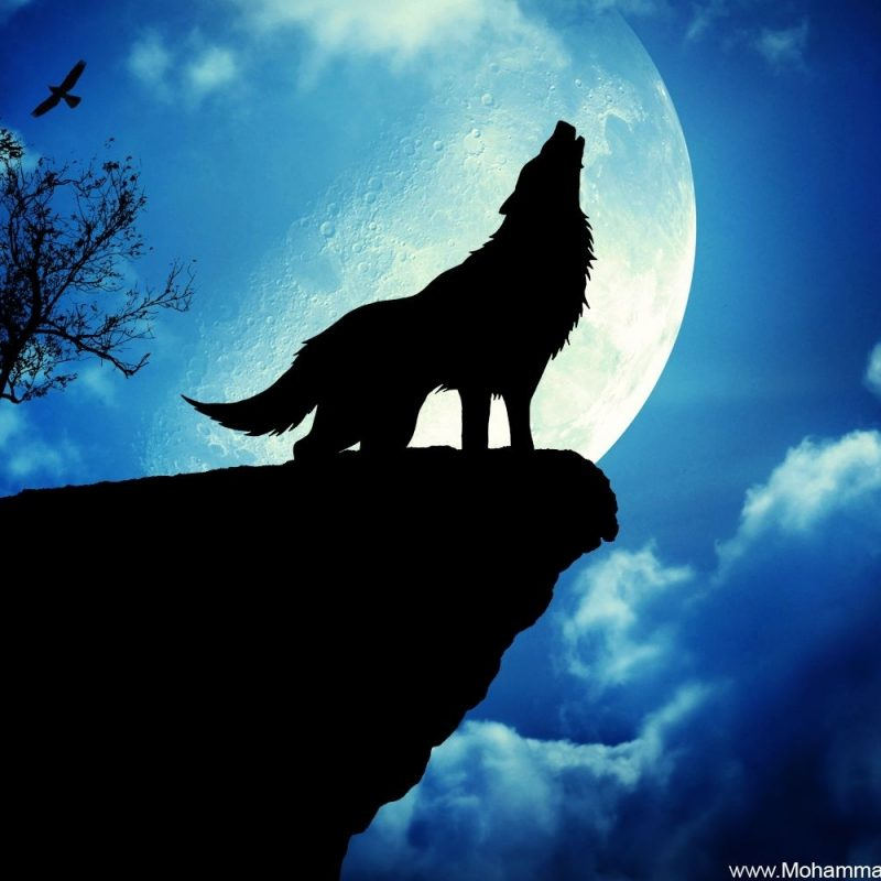 10 Top Moon And Wolf Wallpaper FULL HD 1920×1080 For PC Background 2020 free download download exclusive wolf wallpaper wallpaper full hd wallpapers 800x800