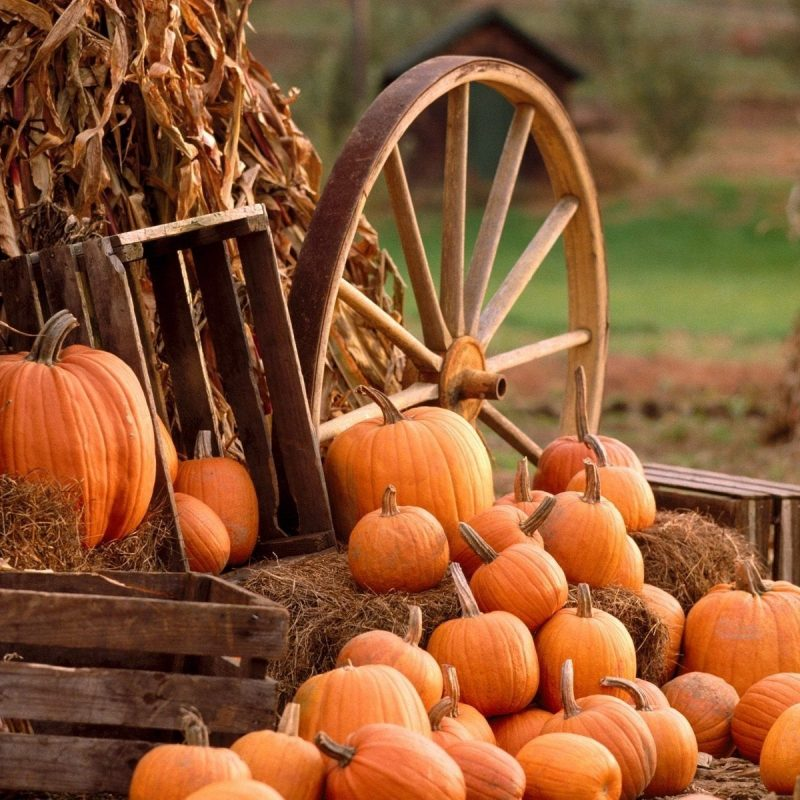 10 Top Autumn Harvest Desktop Backgrounds FULL HD 1080p For PC Background 2020 free download download fall harvest wallpaper high definition for widescreen 800x800