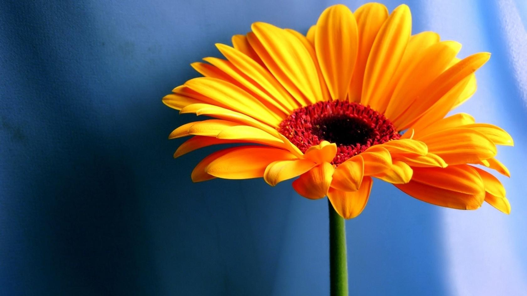 download free flower desktop backgrounds hd images flowers afari of
