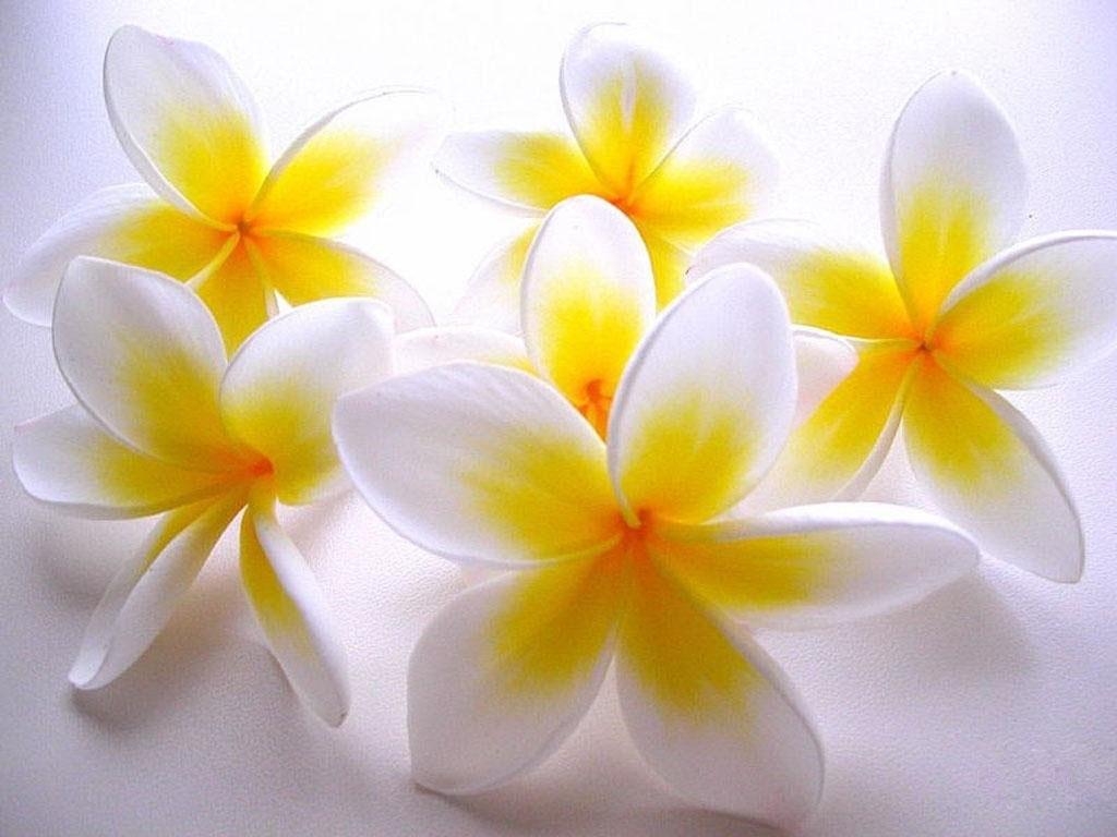 download free flower desktop backgrounds high resolution wallpaper