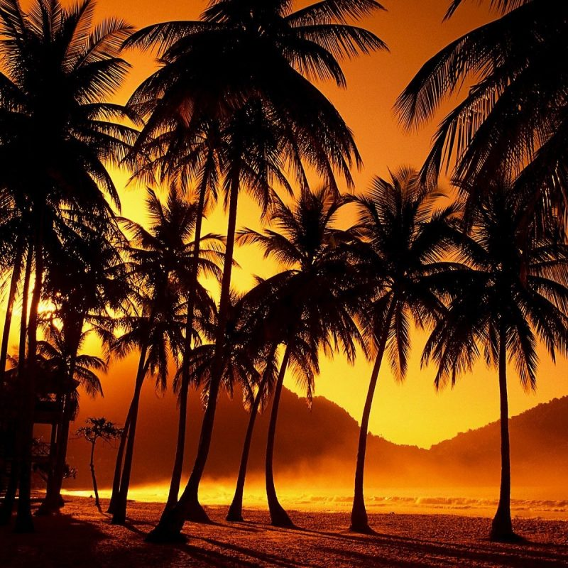 10 Best Palm Trees Wallpaper Hd FULL HD 1080p For PC Background 2018 free download download hd pictures of palm trees wallpapers and photos hd beach 800x800