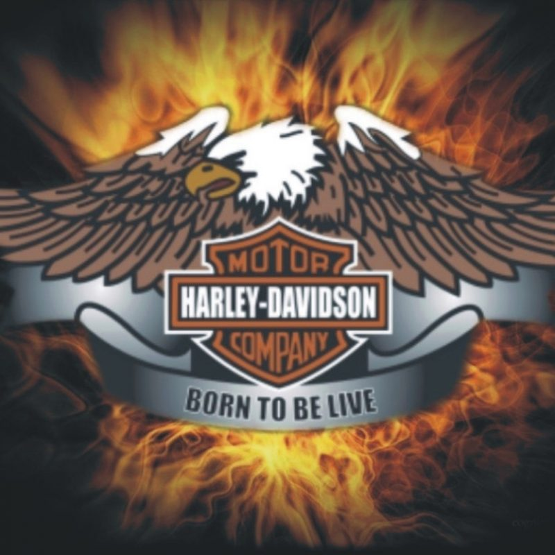 10 Best Free Harley Davidson Wallpaper FULL HD 1080p For PC Desktop 2018 free download download live the free harley davidson born wallpaper 1024x768 800x800
