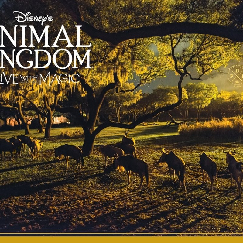 10 Latest Disney Animal Kingdom Wallpaper FULL HD 1920×1080 For PC Background 2020 free download download our disneys animal kingdom nighttime inspired wallpapers 1 800x800