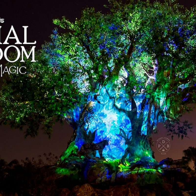 10 Latest Disney Animal Kingdom Wallpaper FULL HD 1920×1080 For PC Background 2020 free download download our disneys animal kingdom nighttime inspired wallpapers 800x800