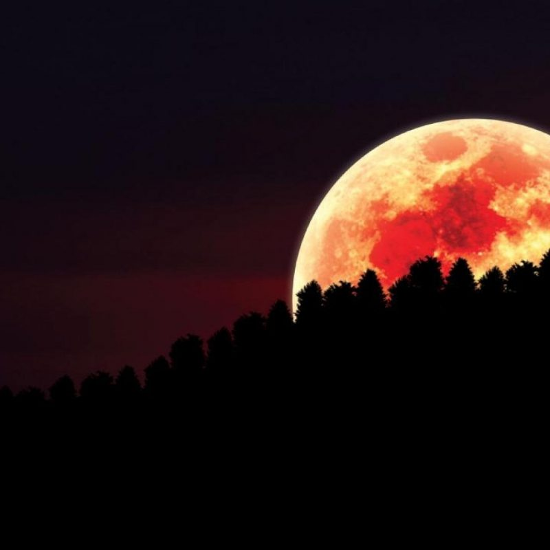10 Best Red Moon Wallpaper Hd FULL HD 1080p For PC Background 2020 free download download red moon over forest wallpapers media file pixelstalk 800x800