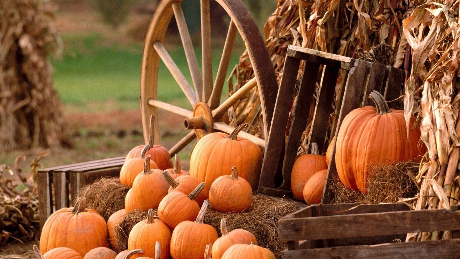 download wallpaper 1600x900 pumpkins, grass, autumn widescreen 16:9