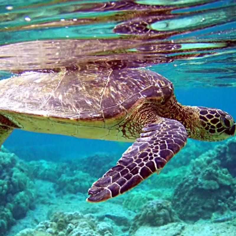 10 New Hd Underwater Wallpapers 1080P FULL HD 1920×1080 For PC Desktop 2020 free download download wallpaper 1920x1080 turtle underwater swimming water 800x800