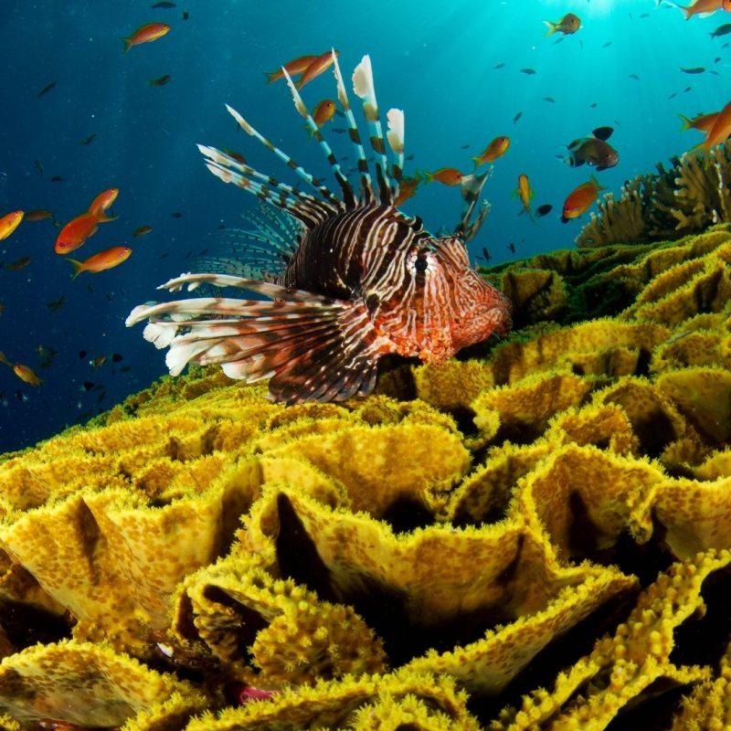 10 New Hd Underwater Wallpapers 1080P FULL HD 1920×1080 For PC Desktop 2020 free download download wallpaper 1920x1080 underwater fish corals full hd 1080p 800x800