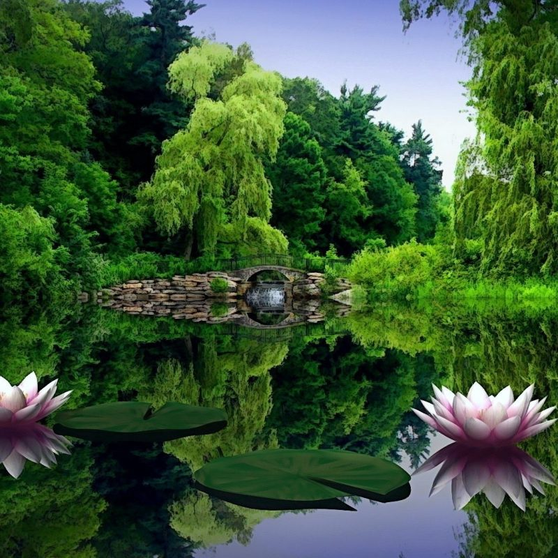 10 Latest Nature Desktop Background 1920X1080 FULL HD 1920×1080 For PC Background 2018 free download download wallpaper 1920x1080 water lilies water leaves pond 800x800
