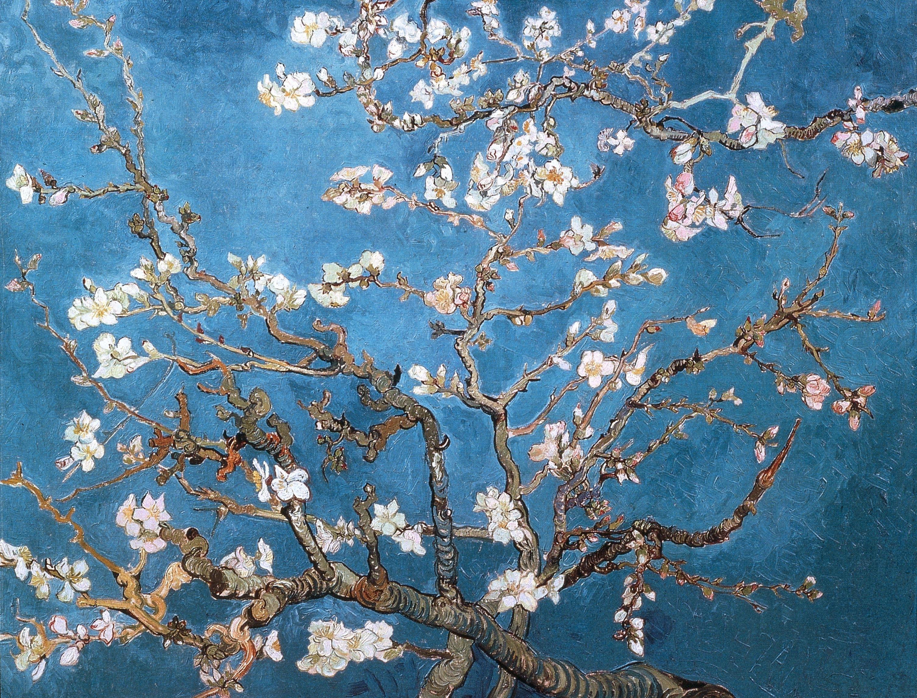 download wallpapers, download 2560x1600 blossoms vincent van gogh